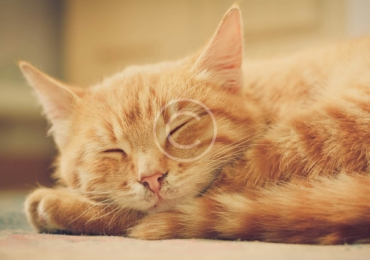 3 Ways to Naturally Reduce Hairballs