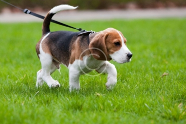 Why Laser Toys Can Be Bad News for Your Pet