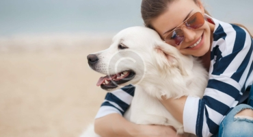 Selection Guide for Dental Toys & Treats for Your Dog